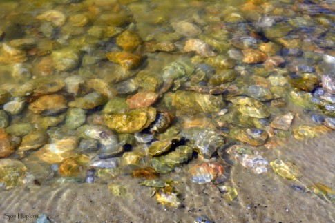 bayside-shells