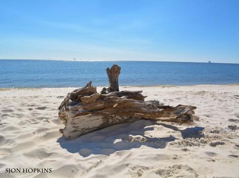 driftwood-1